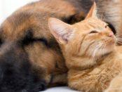 kutya macska immunerősítő